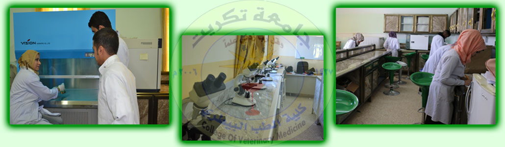 Branch of Microbiology
